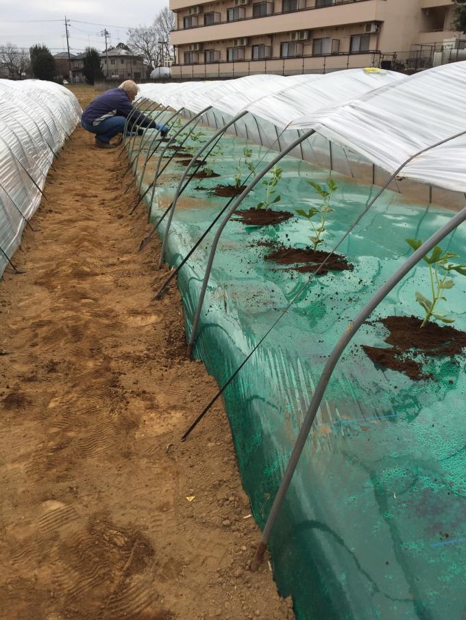 川田研究所の試験農場(春の植え付け)